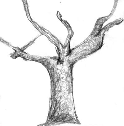rendering trees in plan. Hand Rendering. Cherry Trees