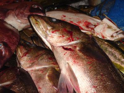 Bloody_fish