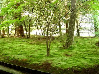 Moss_garden